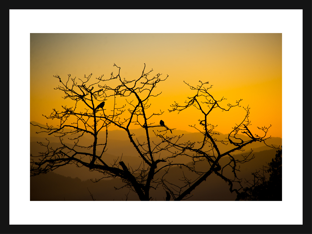 Two Birds and Leafless Tree | Tadapani