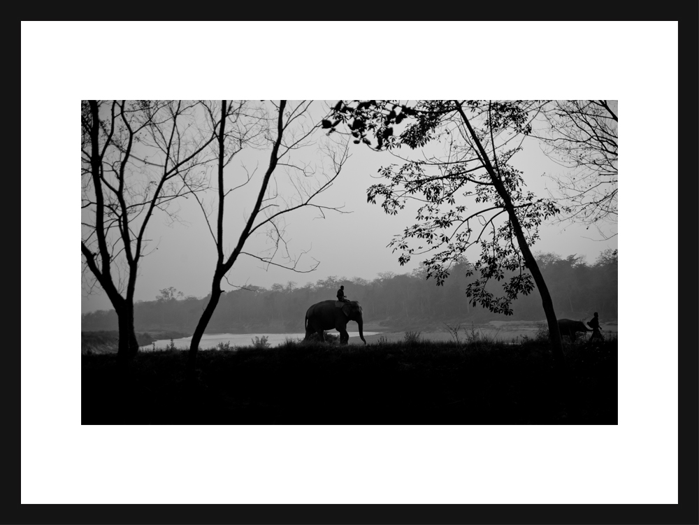 The Urban Elephant - Chitwan